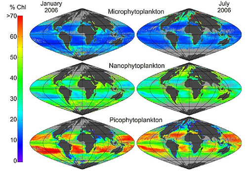 Phytoplankton size class percentages calculated according to the three-component model from a monthly SeaWiFS composite. Light grey refers to unidentified pixels either due to cloud coverage or high sun zenith angles. White pixels represent coastal and inland waters (<200 m depth) in order to eliminate areas where the algorithm has been found to overestimate chlorophyll.